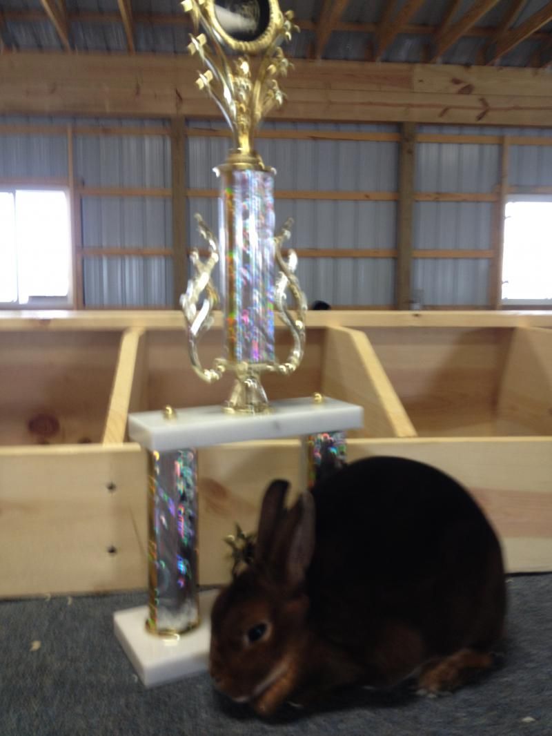 Rose Arbor's Sid Mini Rex castor doe