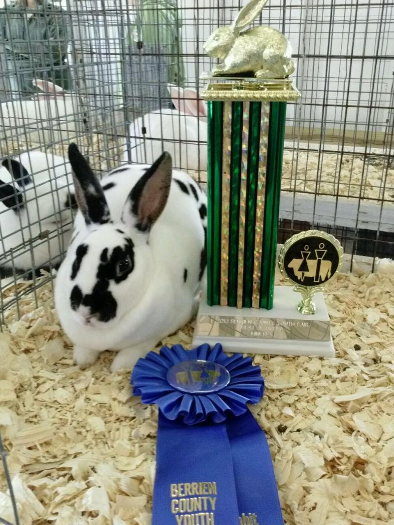 Rose Arbor's Audrey mini rex rabbit